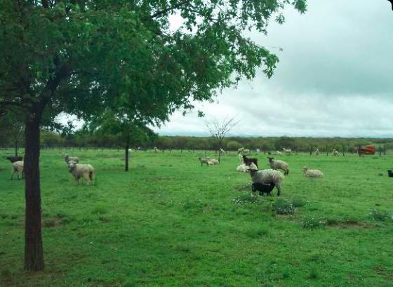 E venta en La Pampa Argentina Finca Ganadera de 1.038 Has - Pastos de invierno - Por Rural Argentina, inmobiliaria especializada en venta desde España de Fincas Rústicas en Argentina