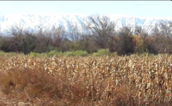 En venta en Argentina - 3.120 Has en San Luis - + Agricultura - Rural Argentina Inmobiliaria especializada en la venta de Fincas en Argentina desde España