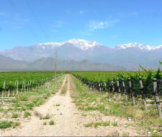 Venta de viñedo de 42 Has en Argentina Valle de Uco - 2 - Rural Argentina Inmobiliaria especializada en la venta en España de Fincas Rurales en Argentina