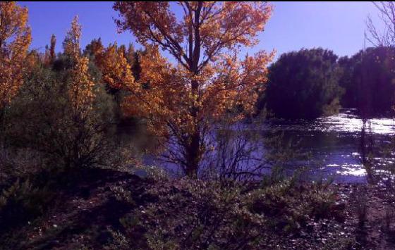 8.200 Has con costa sobre el Rio Negro - Informes en Rural Argentina web