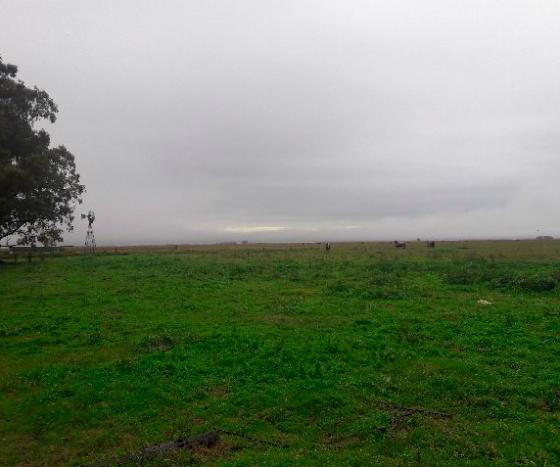 1.000 hectáreas ganaderas en venta en Argentina - En España vende Rural Argentina -3