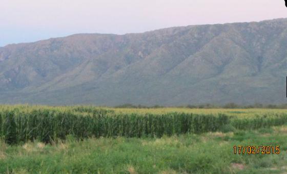 Finca en Argentina 1.260 Has. apta todos los cultivos . España información en Rural Argentina. 10