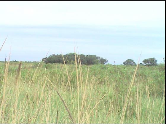Venta de campos en Argentina RURAL ARGENTINA . COM