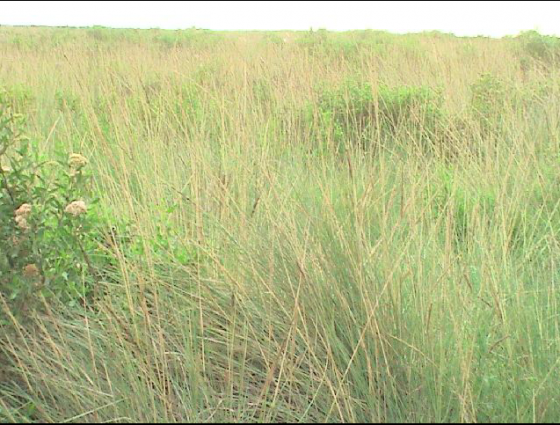 Venta de campos en Argentina - Rural Argentina